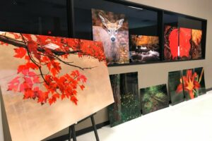 ArtisanHD Fine Art Printing Services ChromaLuxe Images web Art in healthcare facilities